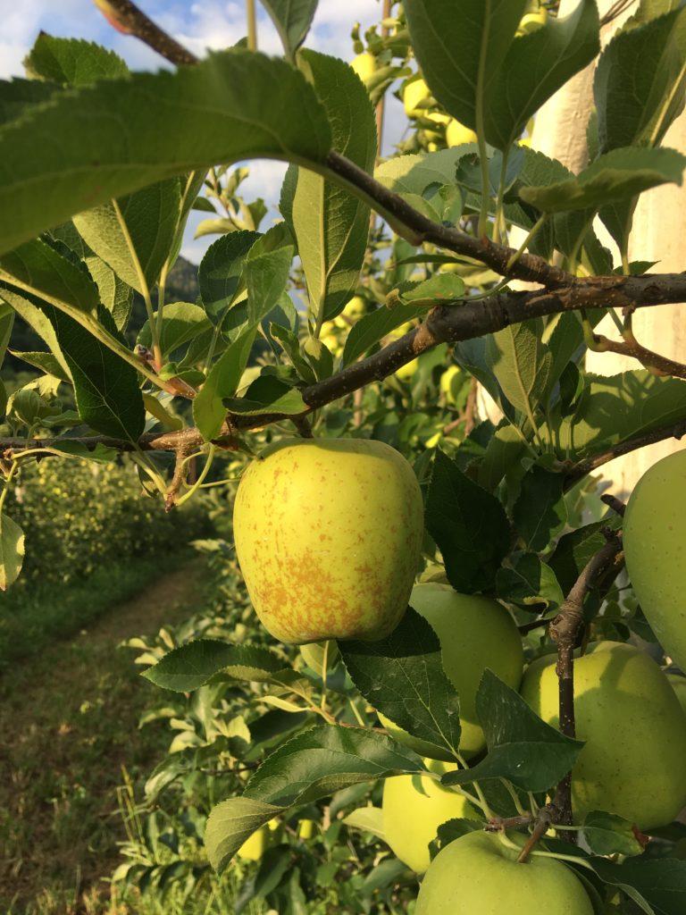 darà il suo frutto